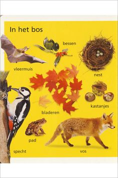 Learning Dutch words - theme: In the forest- Learn Dutch, Going Dutch, Dutch Language, Spanish Vocabulary, Woodland Forest, How To Speak French, Forest Animals, Netherlands, Stage