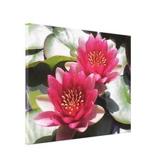 Pink Water Lily Duo. Beautiful floral photography features a pair of deep rose pink water lilies framed with lily pad leaves on Wrapped Canvas Print