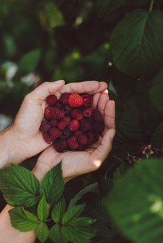 Raspberry picking by Babes in Boyland