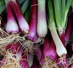 Ramps Ramps Ramps: Some of Our Favorite Ramps Recipes To Consider This Ramps Season