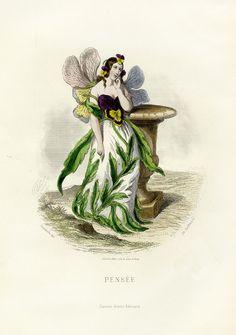 "Illustration ""Pensée"" (pansy) from ""Fleurs Animées"" by the french artist Grandville (1803-1847)."
