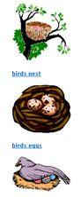 birds  preschool activities, birds preschool birds  lesson plans,preschool thematic units