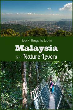 Top 7 Things to Do in Malaysia for Nature Lovers, including visiting Orangutan Sanctuaries, diving Pulau Sipadan, hiking Taman Negara National Park & more.