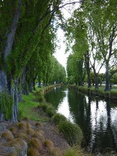 Avon River - Christchurch, New Zealand just a stop as we drive North. Such a beautiful city on the East side of South Island. Places To Travel, Places To See, The Places Youll Go, Tasmania, Avon, Christchurch New Zealand, New Zealand Houses, New Zealand Landscape, New Zealand South Island