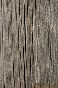 Old dry wood texture