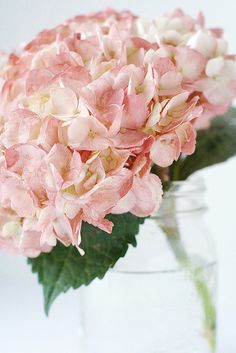 I adore the big pink/cream hydrangias too :) I have fake flower arrangements with these in my bedroom.