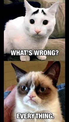 Grumpy Cat: What's wrong? Everything.