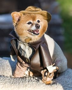 Pomeraniana Jones and the raiders of the lost bark.