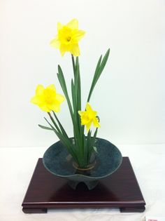 Yellow is daffodils, daffodils are spring.
