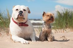 Certified Dog Trainers Are Needed In Florida
