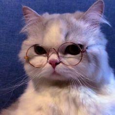 Oh my gosh. Cute Baby Cats, Cute Cats And Kittens, Cute Funny Animals, Cute Baby Animals, Kittens Cutest, Funny Kitties, Snorkeling, Cute Cat Costumes, Cute Cat Memes