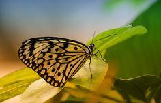 Schmetterlingsgarten Sayn - Bendorf Sayn