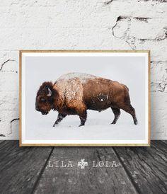 Buffalo Print Bison Wall Art Snow Colour Photo Printable