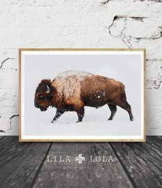 Buffalo Print, Bison Wall Art, Snow, Colour Photo, Printable Boys Kids Room Decor, Large Poster, Contemporary Modern Minimalist