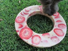 Doggie Fruit & PB ice ring! Perfect for days in the sun. Blend water & 1/2 cup of PB and pour into bundt or cake pan. Add 1 cup of chopped fruit and 2tblspoons of flax seeds. Freeze 4-6hrs.