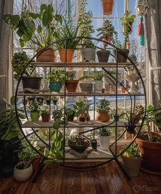House Plants Decor, Plants In Bedroom, Wall Of Plants, Living Room With Plants, Plant Rooms, Indie Room, Aesthetic Room Decor, Aesthetic Plants, Room Ideas Bedroom