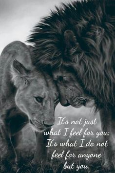 Black and white - Lion and lioness Beautiful Creatures, Animals Beautiful, Beautiful Lion, Animals And Pets, Cute Animals, Wild Animals, Fierce Animals, Baby Animals, Lion Love