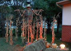 scarecrow in the corn stalks - Halloween Corn Stalks