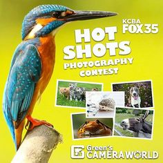 Do you have an eye for photography and love animals?! KCBA FOX 35 and Green's Camera World want to see amateur photos of your favorite animal or pet! Click the link in our bio to submit your photos. We'll pick the top 20 photos and feature them right here on KCBA Fox 35 and one lucky photographer will win a $1,000 gift card to Green's Camera!! #montereylocals #pebblebeachlocals - posted by  https://www.instagram.com/kcba.fox35 - See more of Pebble Beach at http://pebblebeachlocals.com/