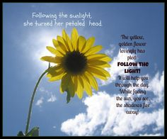 Sunflower Poem and Picture