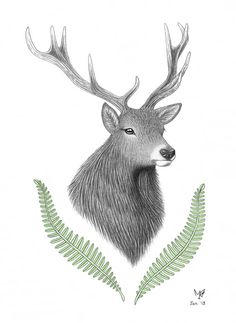 Stag and ferns, by Miki Tillett.