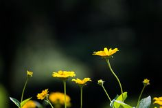Yellow flowers by marbee .info on 500px