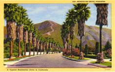 Vintage linen postcard showing view of Meddocino Drive as it winds through Pasadena with palm trees lining both sides of the ... pinned with #Bazaart - www.bazaart.me