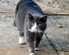 Kit (stray cat)