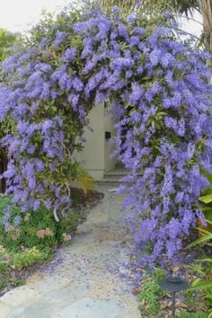 39 Beautiful Evergreen Vines Ideas For Your Home - Alles über den Garten Small Cottage Garden Ideas, Garden Cottage, Privacy Landscaping, Front Yard Landscaping, Landscaping Ideas, Front Yard Landscape Design, Backyard Ideas, Inexpensive Landscaping, Outdoor Landscaping