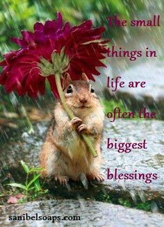 The small things in life are often the biggest blessings.