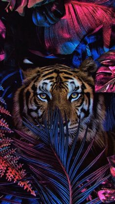 Find images and videos about flowers, wallpaper and animal on We Heart It - the app to get lost in what you love. Wild Animal Wallpaper, Lion Wallpaper, Cute Wallpaper Backgrounds, Cute Wallpapers, Screensavers And Wallpaper, Tiger Pictures, Nature Pictures, Animal Pictures, Daily Pictures