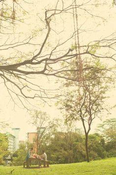 #bench #trees