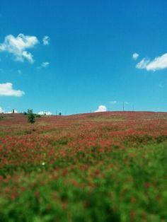 Contrada Pianella, Colle Sannita (BN)