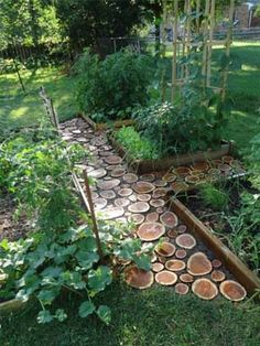 wooden pathway from an old tree