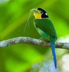 Aves exóticas del Amazonas y del Mundo. - Taringa!
