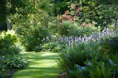 Looking for Plants For The Dry Shade Garden? Here are our some of of are best recommendations for gardens in dry shade or woodland garden spaces.