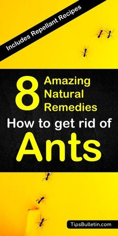 How to get rid of ants. With detailed natural pest control recipes using home remedies - vinegar, ch Ant Remedies, Natural Remedies For Ants, Home Remedies For Ants, Natural Cures, Sugar Ants, Ants In House, Black Ants, Get Rid Of Ants, Best Pest Control