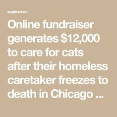 Online fundraiser generates $12,000 to care for cats after their homeless caretaker freezes to death in Chicago alley