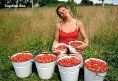 4 лучших удобрения для клубники Small Farm, Garden Plants, Outdoor Plants, Vegetable Garden, Garden Design, Country Life, Sodas, Gardening Tips, Horticulture