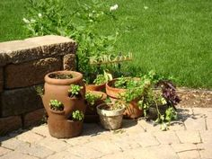 Google Image Result for http://www.home-garden-ideas.net/images/herbs_in_containers.jpg