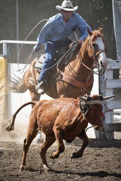 Rodeo Cowboys, Black Cowboys, Real Cowboys, Elephant Photography, Animal Photography, Western Clip Art, Western Horsemanship, Team Roper, Cowboy Pictures