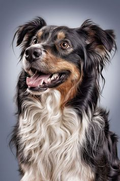 """Draw Dogs / Photo """"Australian Shepherd"""" by Sven Engel English Shepherd, Australian Shepherd Dogs, Animal Paintings, Animal Drawings, Dog Photos, Dog Pictures, Animals And Pets, Cute Animals, Shepherd Puppies"""