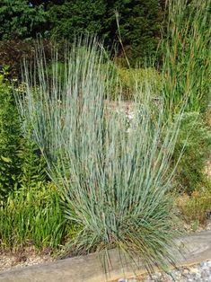 You can count on these beautiful, low-maintenance and easy-growing ornamental grasses to add color to your yard all year long. Low Maintenance Garden Design, Low Maintenance Landscaping, Lawn Maintenance, Plant Pictures, Garden Pictures, Modern Landscaping, Front Yard Landscaping, Landscaping Plants, Backyard Patio