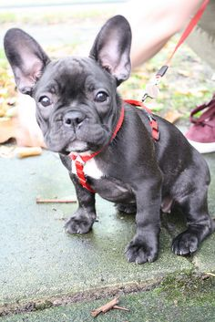 Look at those ears!! I want this babe in my llife!!