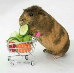 Guinea pig zone - shopping for veggies
