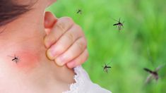 What is dengue? Know why is it widespread and how long it takes to recover from the disease Treatment For Mosquito Bites, Bug Bite Treatment, Remedies For Mosquito Bites, Tribal Tattoos, Grey Ink Tattoos, Elephant Tattoos, Crow Tattoos, Phoenix Tattoos, Ear Tattoos