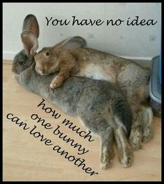 .my bunny loves our dog