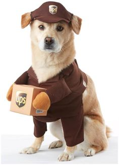 PartyBell.com - UPS Worker #PetCostume                                                                                                                                                                                 More