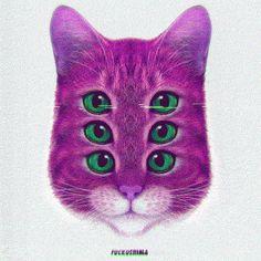 Cat G I Ғ M K