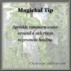 Magickal Tip - Rosemary Water for Healing – Charissa's Cauldron